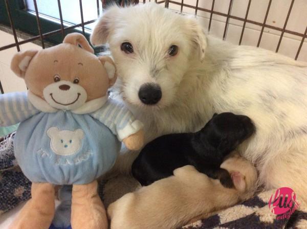 """La cagnetta Bianca con il suo cucciolo Maurilio e l'affiliato cucciolo Neil ( nome d'astronauta ) unico sopravvissuto di una cucciolata """"volata"""" da un'auto in corsa"""