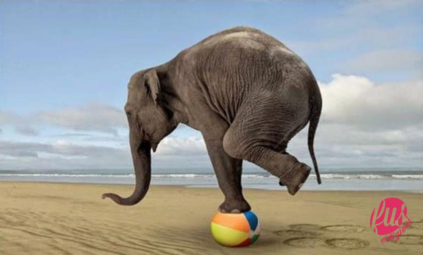 elefante equilibrio