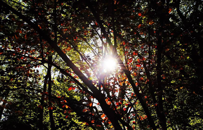 Sole tra le fronde mod
