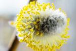 Il polline e il senso della vita