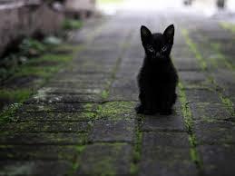 Vecchio nero africano micio